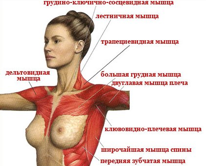 Они подтягивают основные мышцы